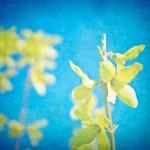 Spring-Interior-Design-Ideas_ decorating blue yellow flower print