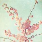 Spring-Interior-Design-Ideas_Spring flowers honeysuckle