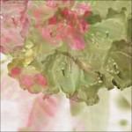 Spring-Interior-Design-Ideas_Spring flowers print